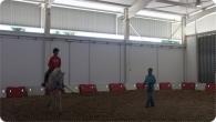 Aulas Equitação :: equitacao_2011_16