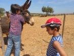 Atividades Lúdico pedagógicas :: actividades_52